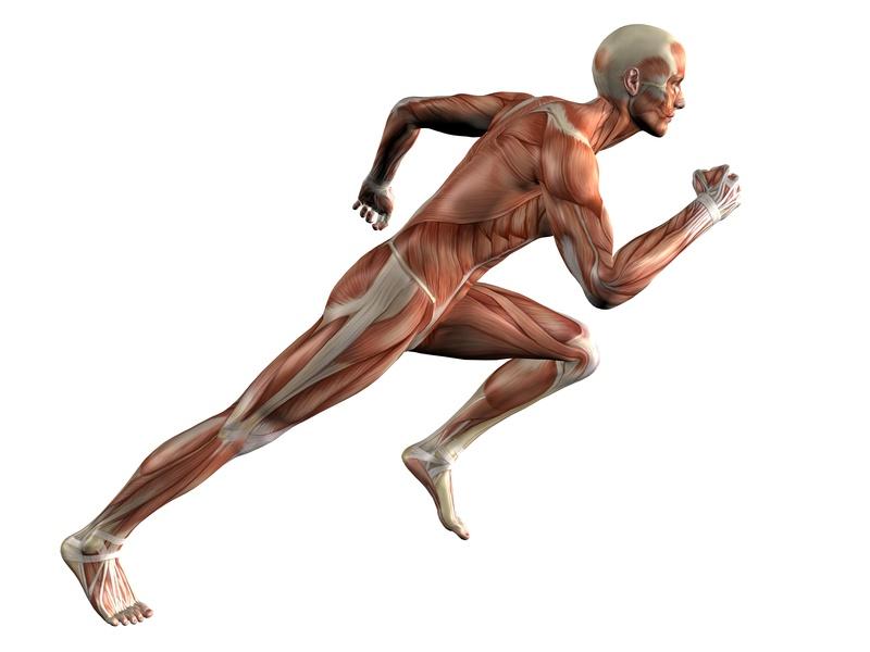 a biomechanical analysis of jogging vs Biomechanics of running previous to sports biomechanics next characteristics of running cycle biomechanical analysis of running.